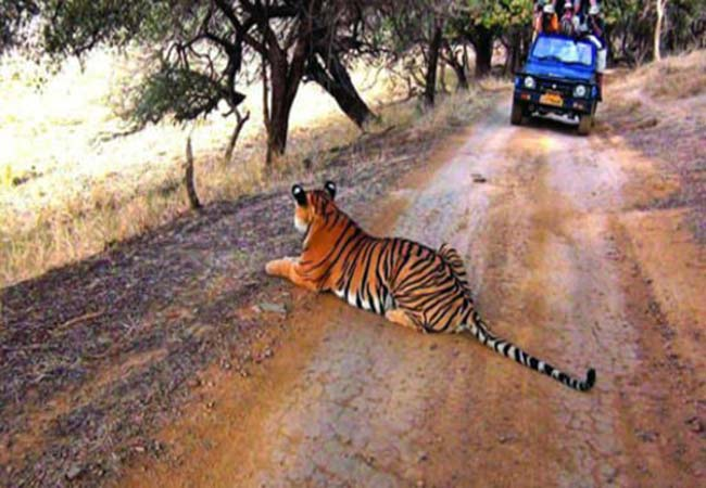 Cost-of-Tiger-safari-In-India